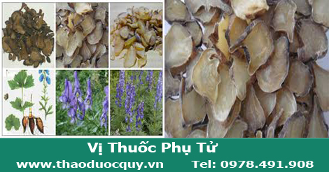 Phụ Tử